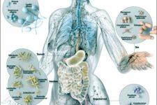 I batteri (microbiota intestinale) possono aiutare a sostenere e a modellare la pelle: ecco come!!!